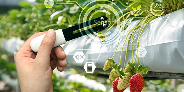 LoRa ecosystem sensor