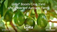 LoRa Boosts Crop Yield on Connected Avocado Farms