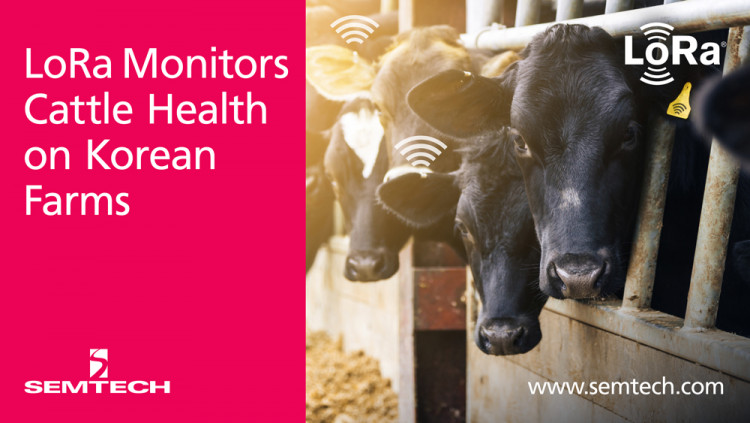 Semtech and SK Telecom Leverage LoRa Technology to Monitor Cattle Health LiveCare LoRa-based IoT system enables accurate analysis of a cow's health and milk producing ability